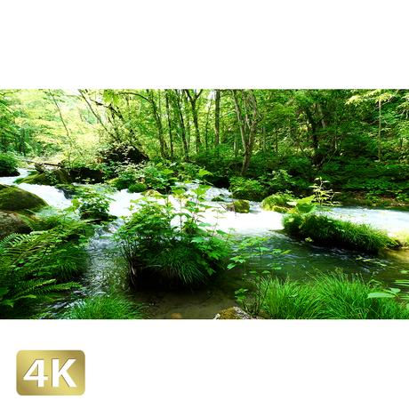 1035046 ■ 奥入瀬渓流 石ヶ戸の瀬