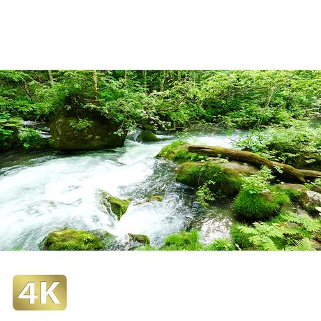 1035067 ■ 奥入瀬渓流 渓流