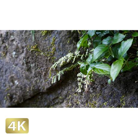 1033041 ■ 柿田川 岩と植物