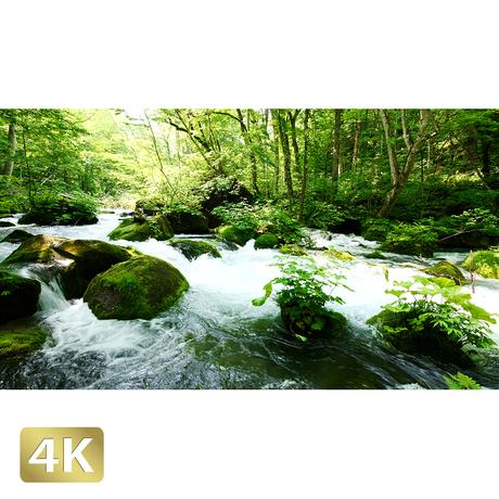 1035045 ■ 奥入瀬渓流 石ヶ戸の瀬