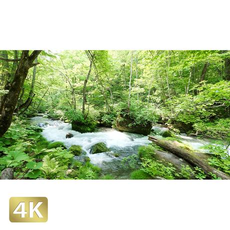 1035004 ■ 奥入瀬渓流 渓流