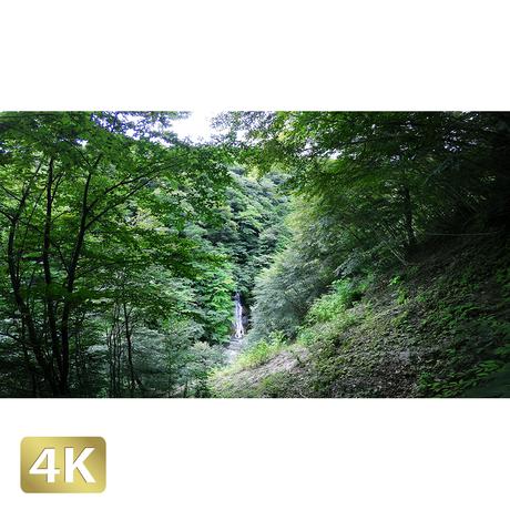 1010002 ■ 西沢渓谷 大久保の滝