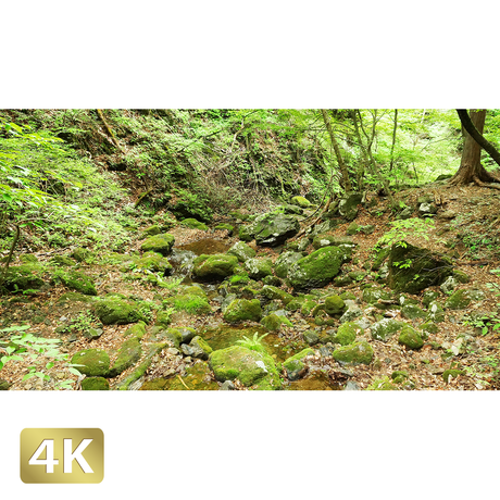1037055 ■ 御岳山 ロックガーデン