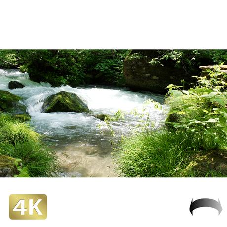 1035036 ■ 奥入瀬渓流 渓流