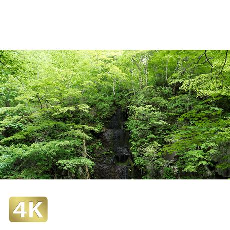 1035042 ■ 奥入瀬渓流 白髪の滝