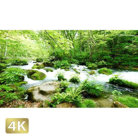 1035068 ■ 奥入瀬渓流 石ヶ戸の瀬