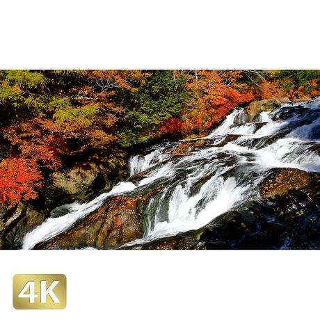 1014014 ■ 日光 紅葉 竜頭の滝