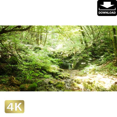 2037042 ■ 御岳山 ロックガーデン