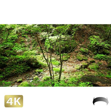 1037053 ■ 御岳山 ロックガーデン