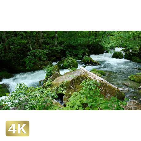 1035031 ■ 奥入瀬渓流 阿修羅の流れ