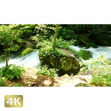 1035032 ■ 奥入瀬渓流 阿修羅の流れ