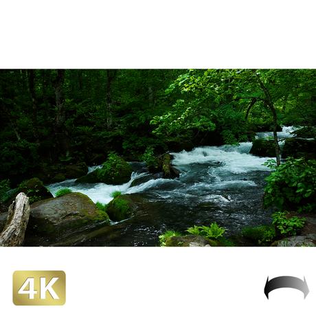 1035016 ■ 奥入瀬渓流 阿修羅の流れ