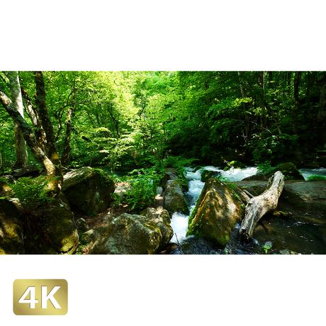1035060 ■ 奥入瀬渓流 阿修羅の流れ