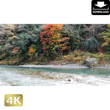 2017012 ■ 奥多摩 多摩川 紅葉