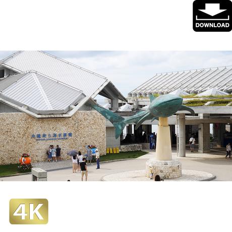 2042107 ■ 沖縄 ちゅらうみ水族館