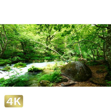 1035047 ■ 奥入瀬渓流 石ヶ戸の瀬