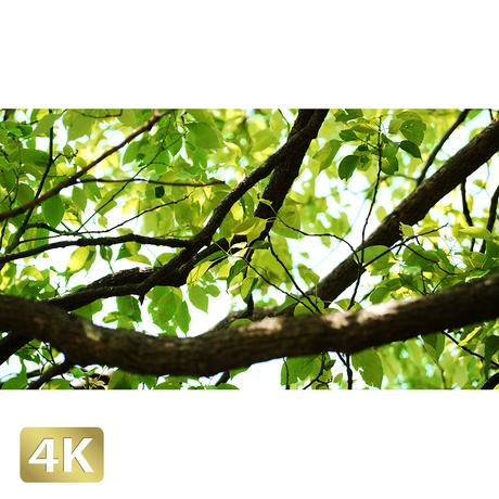 1034009 ■ 渡良瀬遊水池 樹木