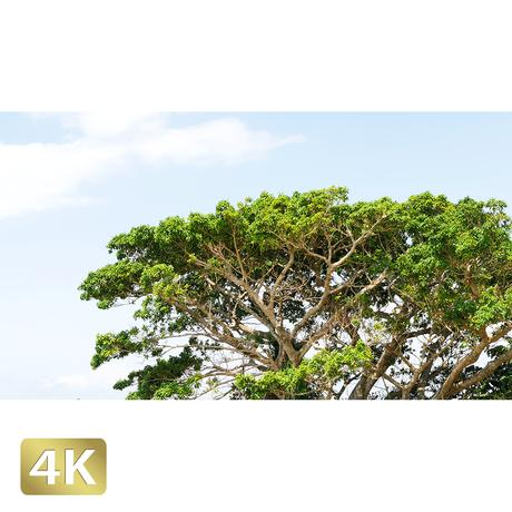 1023032 ■ 西表島 奇木