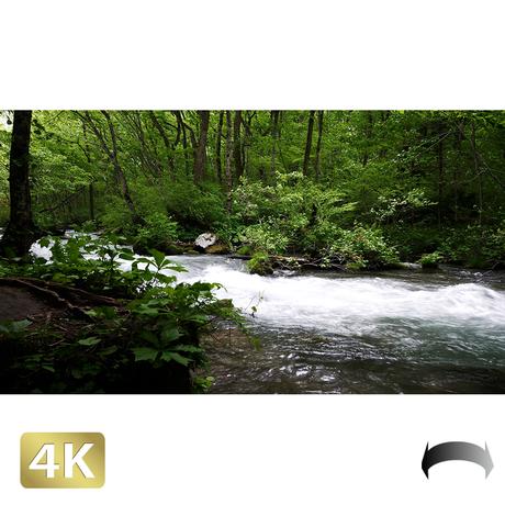 1035012 ■ 奥入瀬渓流 渓流