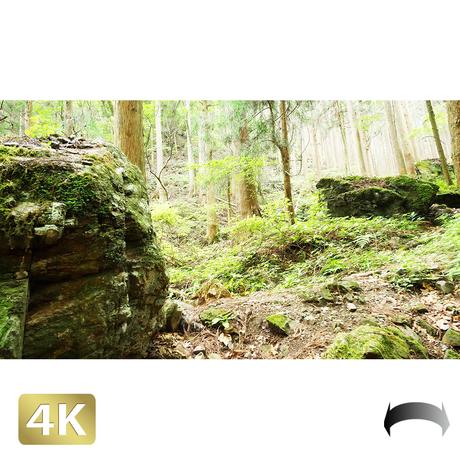 1037038 ■ 御岳山 ロックガーデン