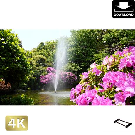 2033003 ■ 柿田川 噴水