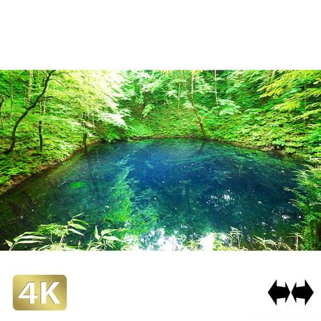 1036005 ■ 白神山地 十二湖 青池