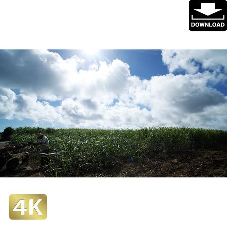 2041189 ■ 宮古島 畑
