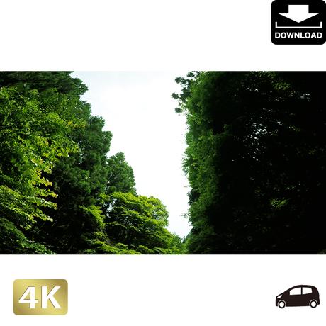 2004016 ■ 秋川渓谷 林道