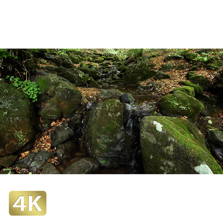1037026 ■ 御岳山 ロックガーデン