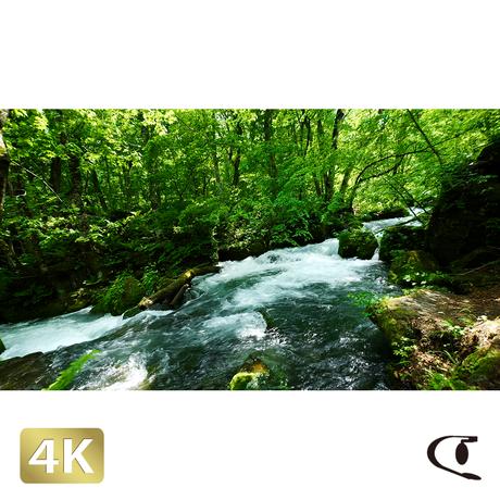 1035017 ■ 奥入瀬渓流 阿修羅の流れ