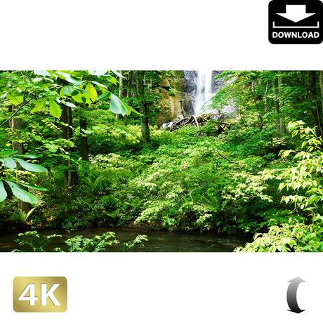 2035108 ■ 奥入瀬渓流 白布の滝