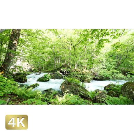 1035035 ■ 奥入瀬渓流 石ヶ戸の瀬