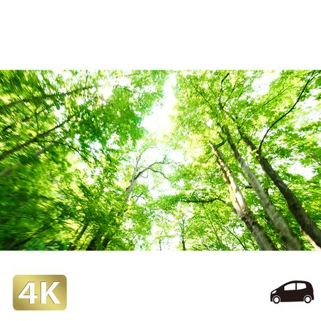 1035050 ■ 奥入瀬渓流 林道