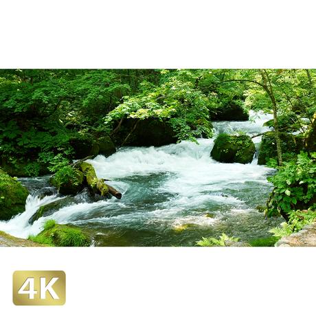 1035029 ■ 奥入瀬渓流 阿修羅の流れ