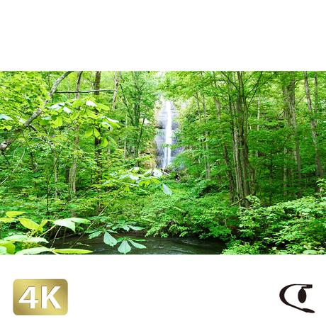 1035073 ■ 奥入瀬渓流 白布の滝
