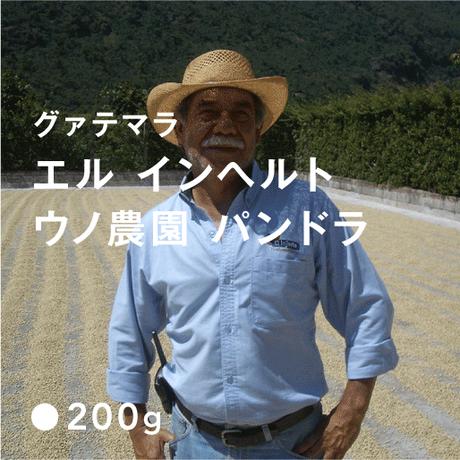 グァテマラ エル インヘルト ウノ農園 パンドラ / 浅煎り (High Roast)