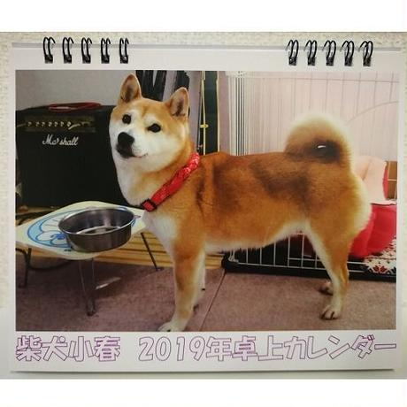年始到着可能性あり【送料無料】2019年 柴犬小春 卓上カレンダー