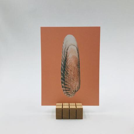 sava-s (card satnd)