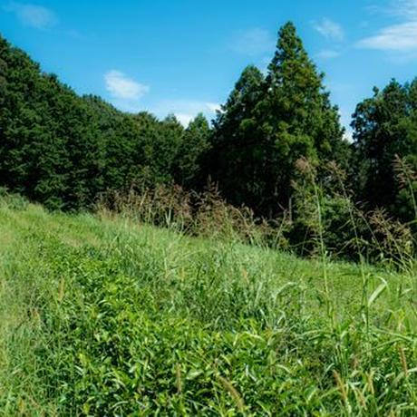 杉本園の高級深蒸し荒茶(静岡県)