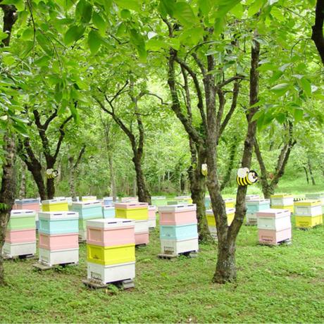 春日養蜂場の伊吹百草蜜600g(岐阜県)