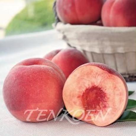 【8月24日午前中受付終了】新品種の桃「陽夏妃」1.4kg