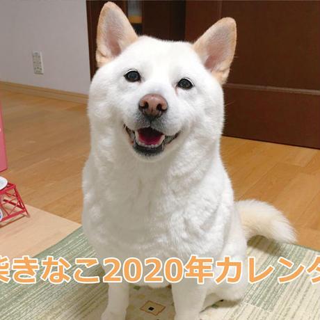【送料無料】2020年『白柴きなこ』壁掛けカレンダー