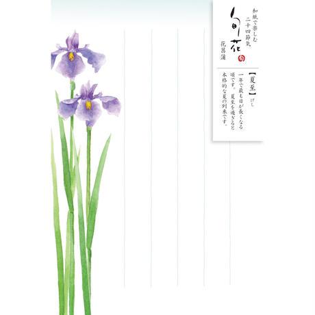 HK108旬花 はがき 花菖蒲