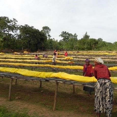 エチオピア シダモ地区 オロミア農協(ウォッシュド) 200g  浅煎り