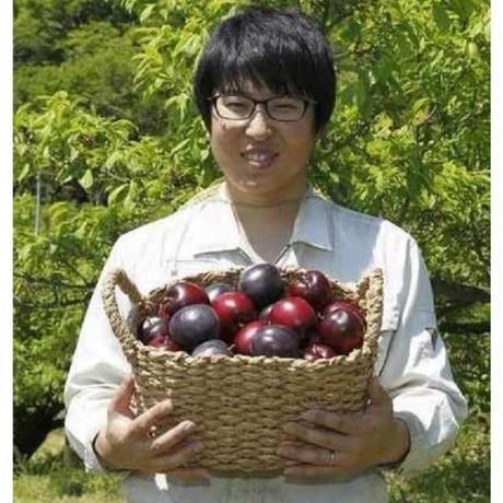 【6月限定・完全予約販売】樹上完熟スモモ 1箱(約400g/P×4P)