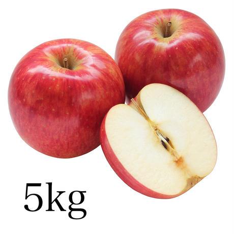 さんふじりんご約5kg