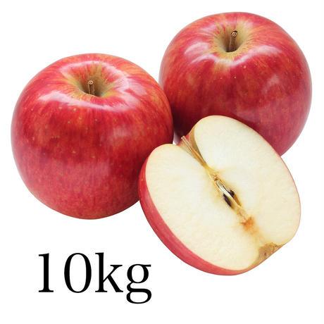 さんふじりんご約10kg