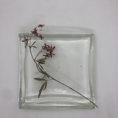 ガラス四角皿