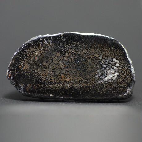 ダイナソーボーン 研磨原石 041