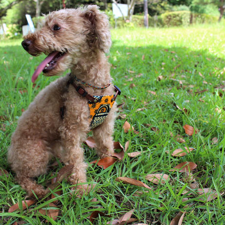 ♡小型犬用Dog ハーネス♡